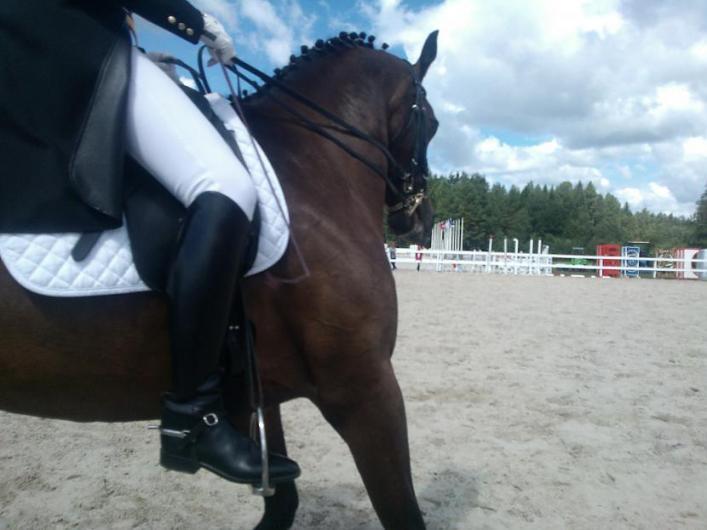 Vislatvijas zirgu dienas aicina izbaudīt nedēļas nogali